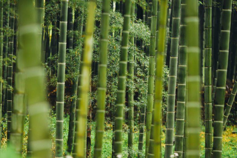 bambussengetøj